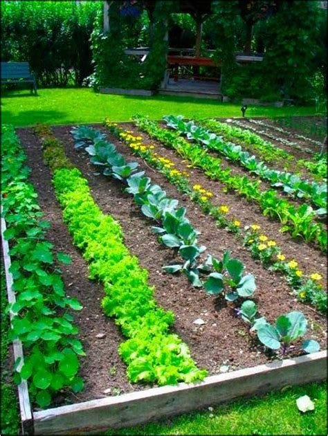 all about vegetable garden layout front yard landscaping