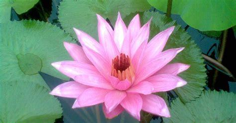mengidentifikasi ciri khusus tumbuhan yang hidup di lingkungan tertentu