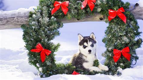imagenes de animales navidad im 225 genes gif de perros en navidad
