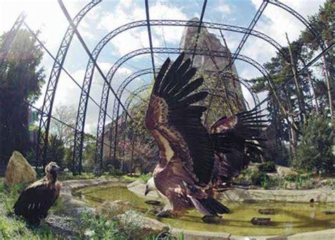 vulture enclosure    updates    year