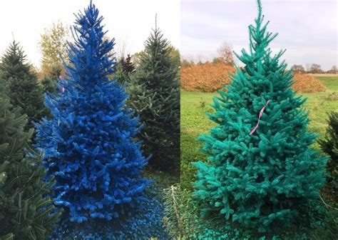 troopers seek real life grinch painted christmas trees