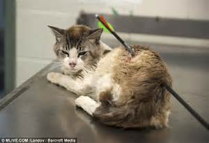 how to euthanize a vets forced to euthanize cat after he was found by an