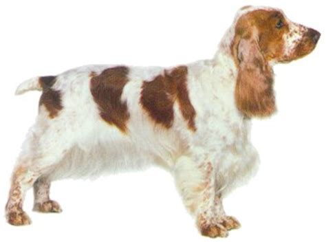 my me chronicles of a cocker spaniel books appreciation thread page 6
