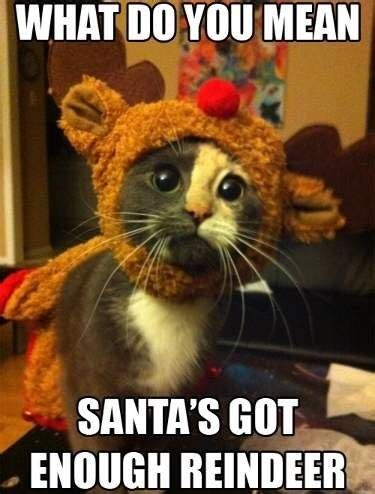 funny christmas memes ideas   pinterest