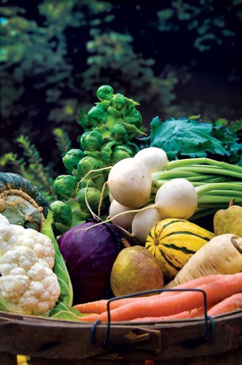 grow your best fall garden vegetables what when and how