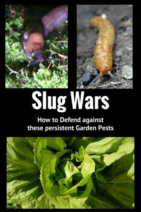 slug wars the battle continues how to kill slugs