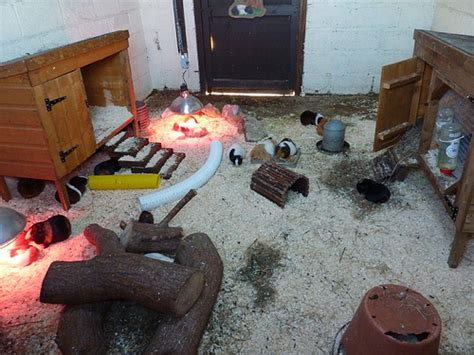Guinea Pig Shedding guinea pig shed explore craftytrekky s photos on flickr