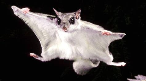 scogliattolo volante geol431 vertebrate paleobiology