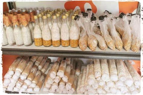 Bibit F1 tentukan bibit jamur yang akan dikembangkan pembuatan