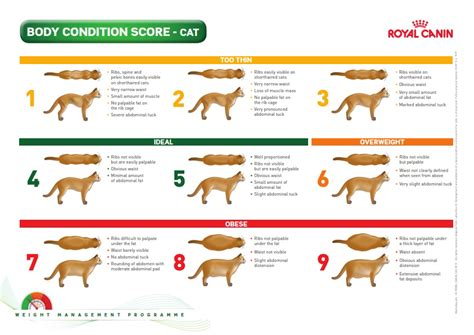 condition score feline weight loss cwvc limited