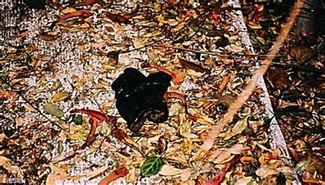 nicole brown simpson murder scene simpson crime scene photos www pixshark com images