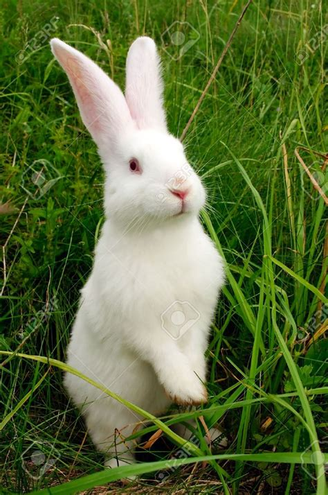 12 Md Rabbit Bery White image gallery white bunny