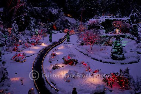 butchart gardens holiday lights tour butchart gardens victoria bc british columbia canada