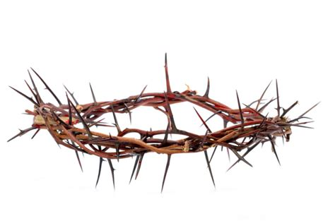 How To Make A Crown Of Thorns Out Of Paper - crown of thorns catholic news service