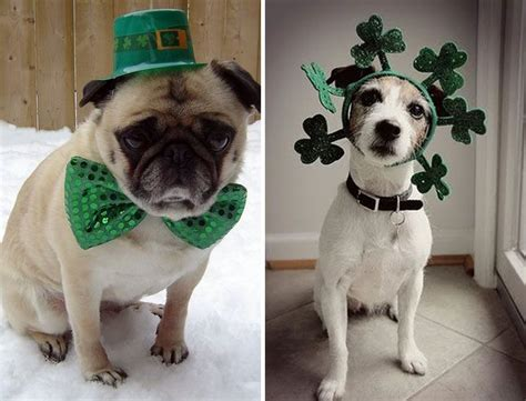 pats precious puppies 1000 images about luck of the pup on car signs st s day and st