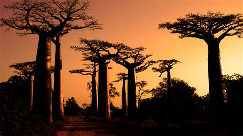 madagascar custom travel planners  independent tours