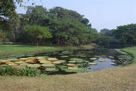 botanical garden shibpur panoramio photo of botanical garden shibpur