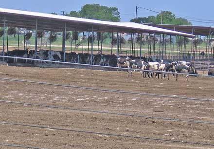 small planet cornucopia institute aurora texas factory farm cornucopia institute