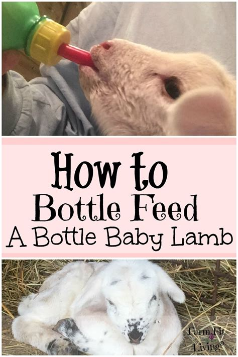 How Not To Bottle Feed by How To Bottle Feed A Successfully Farm Fit Living