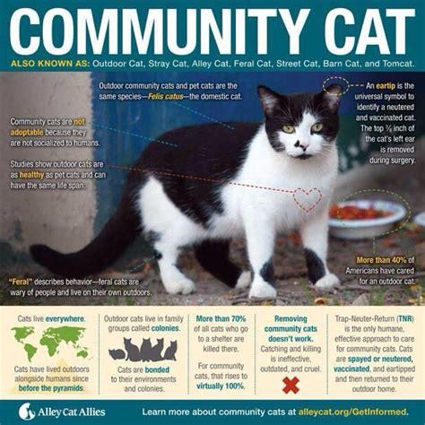 stray cat trap stray cat strut conscious companion