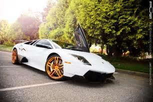 White Gold Lamborghini White Black Gold Lamborghini Kayta