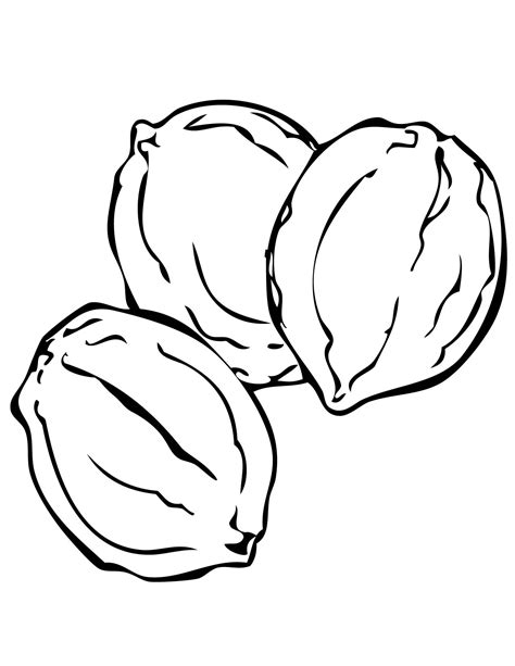 Nuts Coloring Pages Free Coloring Pages Of Nuts