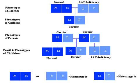 alpha 1 antitrypsin deficiency nih genetics home reference