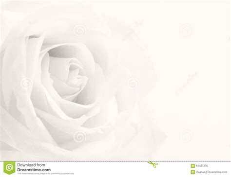 Wedding Background Black And White by Beautiful Toned White Up As Wedding Background