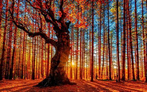 blacksmith colourful trees of fall art panels by bosque hermoso atardecer de oto 241 o 225 rboles hojas rojas