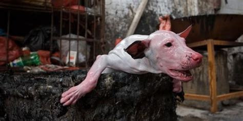 boiling dogs be informed with the news in china korea romania usa canada agorg ireport