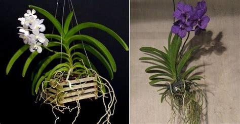 orchidea vanda in vaso di vetro vasi per orchidee orchidee modelli di vasi per orchidee