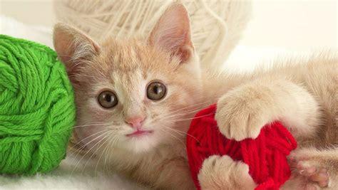 wallpaper of cat download free download iphone 5 cat wallpapers 640x1136 1136x640