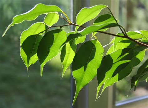 plants  indoor air quality