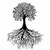 Family Tree Roots Background   3292 x 3292 jpeg 1360kB