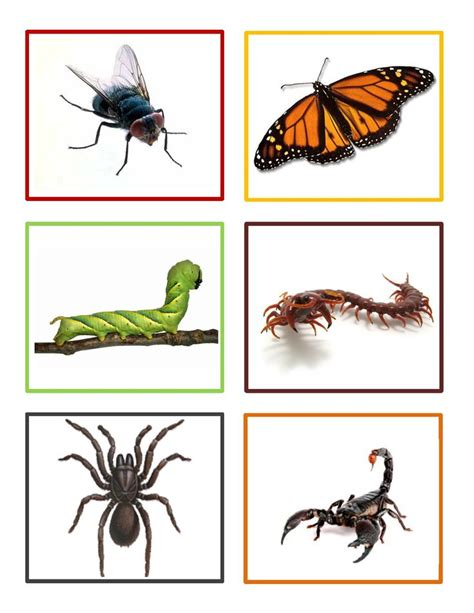 insects for kindergarten 26 best ideas about preschool bugs insects on pinterest