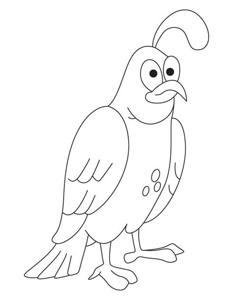 free coloring pages quail common quail coloring page free q for quail coloring