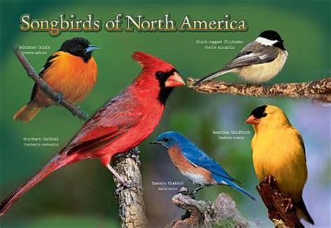 backyard of america backyard birds north america identification 2017 2018