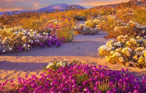 anza borrego super bloom off topic super bloom in california is just days away intel