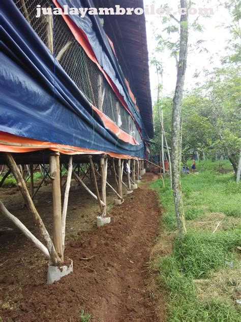 Jual Bibit Ayam Broiler Jakarta jual ayam broiler di jakarta timur jual ayam broiler