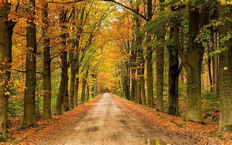 landscape nature tree forest woods autumn path road