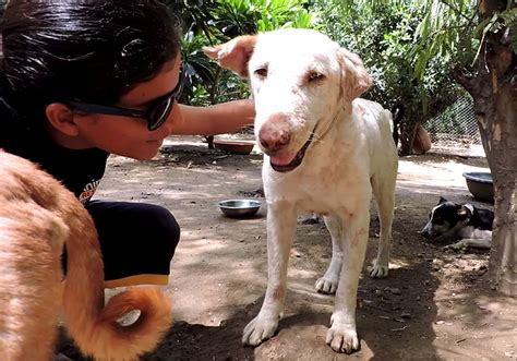 puppies unlimited dying found on is completely transformed in two months bored panda