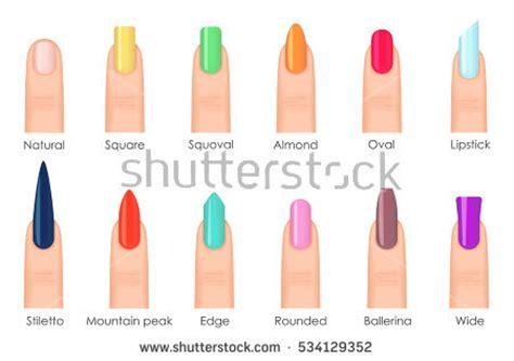 fingernail stock images royalty  images vectors