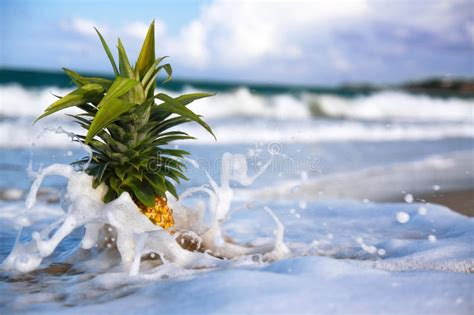 pineapple waves pineapple in waves of atlantic ocean royalty free stock