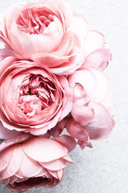 Blumen Fuß 5489 by Porncake Inspiration Pfingstrose