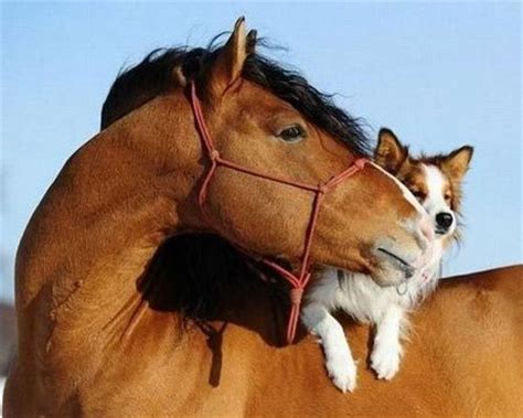 puppies and horses 10 interesting facts my interesting facts