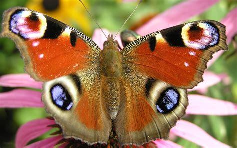 le schmetterling patronen vlinder hobby blogo nl