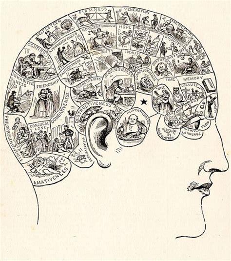 libro delusions of gender the el sexo del cerebro parece tener escasa relevancia la