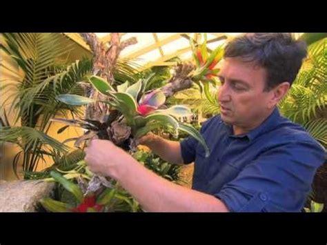 garden gurus creating  living bromeliad tree