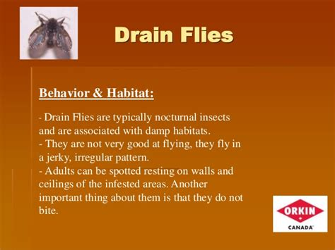 how to get rid of drain flies in the bathroom nbnpha 2014 conference saint john workshop f pest