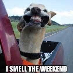 Meme Weekend - 80 it s friday memes 2017